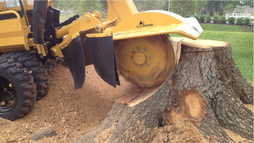 Tree Crown Reduction Bingham