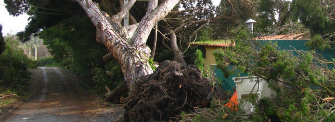 Tree Removal Bonaly