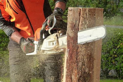 Tree Services Barnton